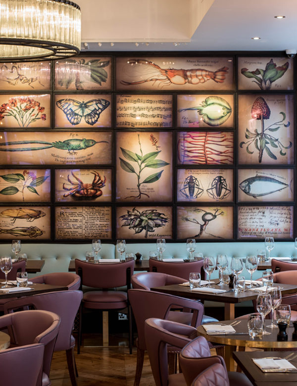 The dining room at The Botanist Sloane Square features a wall of colourful botanical illustrations. Interiors designed by Russell Sage Studio Ltd.