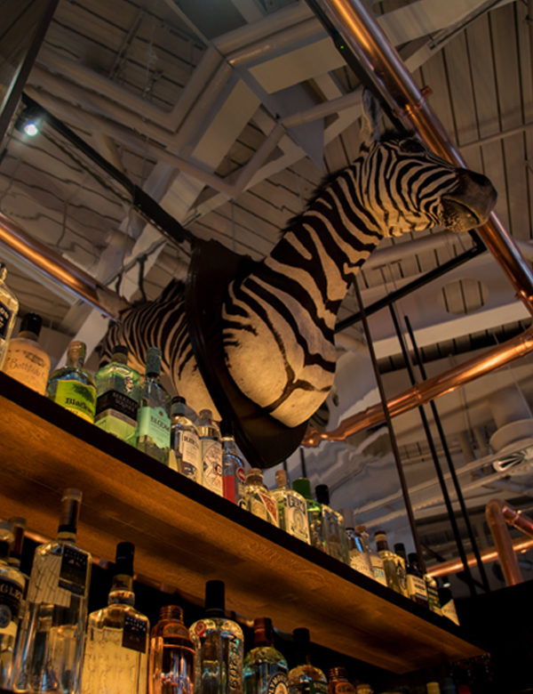 A Zebra looks on above the bar at Greenwood, Nova, Victoria, London. Interiors designed by Russell Sage Studio Ltd.